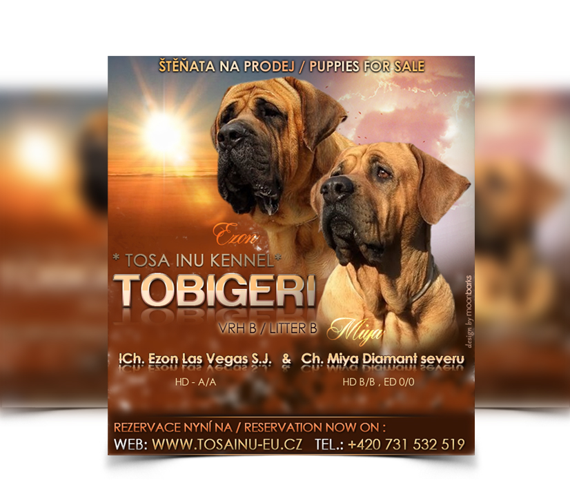 dog sale flyers exploredogs com