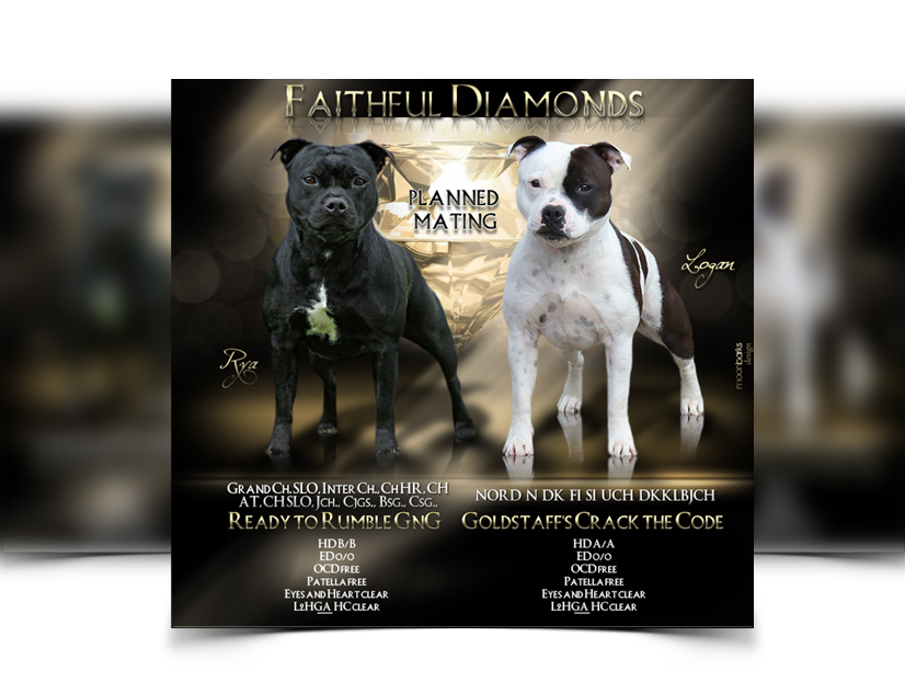 puppy for sale flyer templates - breeder webdesign dog kennel design best dog breeder