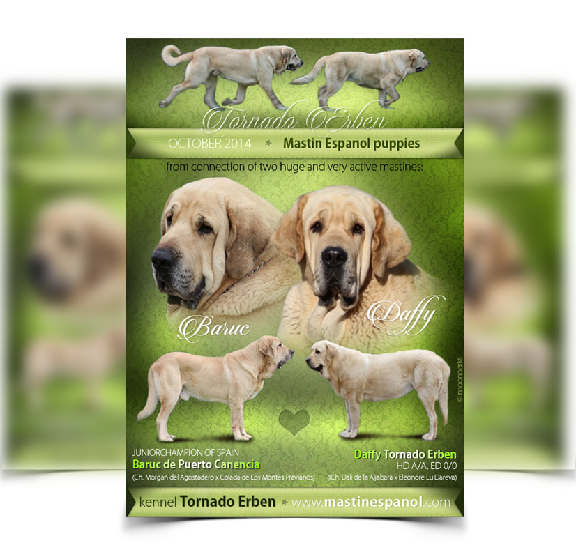 Dog design flyer