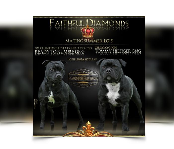 Best Car Designs >> Breeder webdesign, dog kennel design, Best dog breeder webdesign, dog photography, studio Prague
