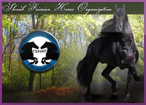 Webdesign pro chovatele koní - Fríský kůň webdesign