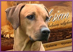 Tvorba www stránek pro chovatele